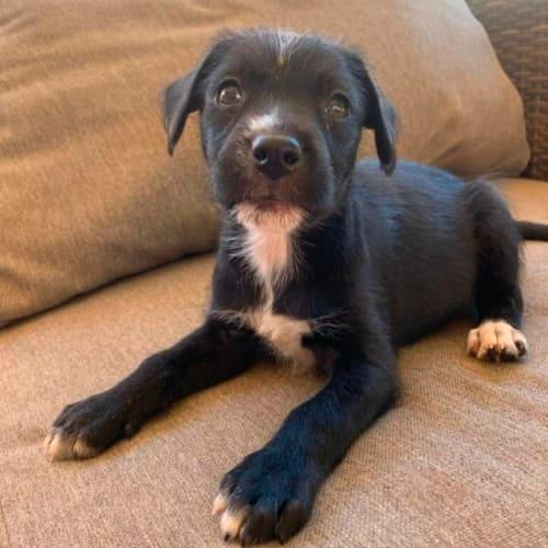 Poppy - Mixed Breed Dog