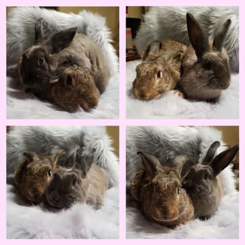 Mirabelle and Mocha -  Rabbit