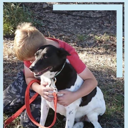 Carly - Kelpie Dog