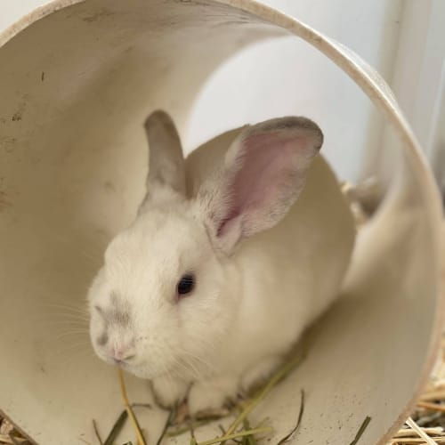 Scott -  Rabbit