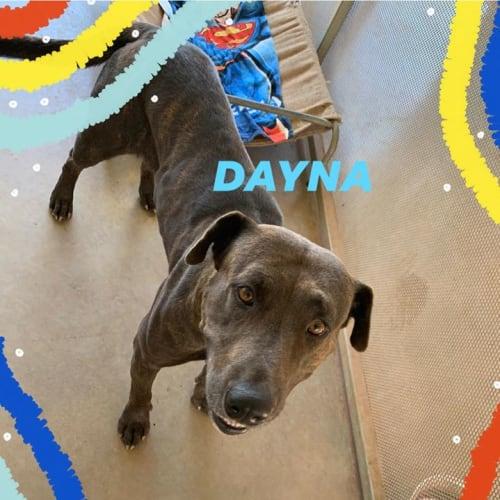 Dayna  DG20-131 - Mixed Breed Dog
