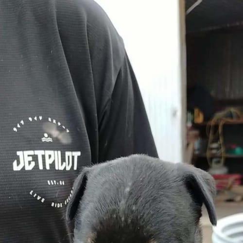 Turbo - Bullmastiff x Ridgeback Dog