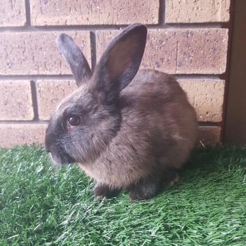 Bambi - Bunny Rabbit