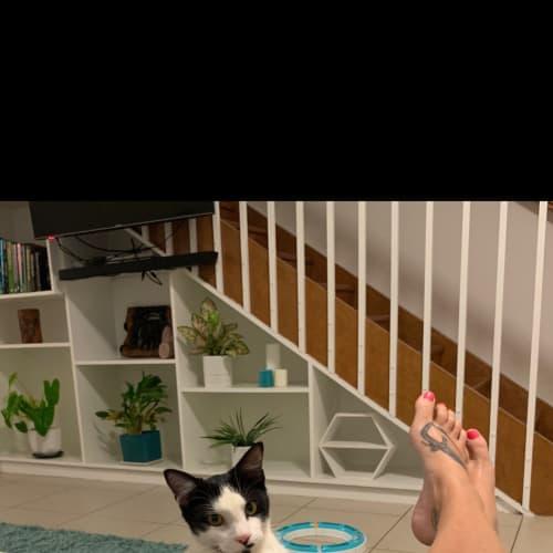 Birdie - Domestic Short Hair Cat