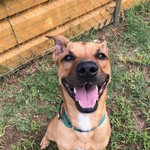 Rollo - Medium Mixed Breed Dog