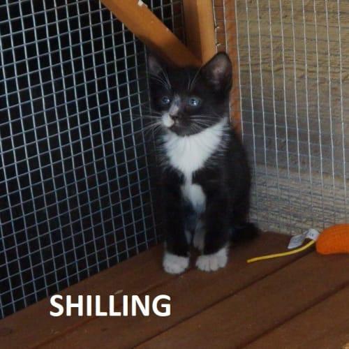 Shilling