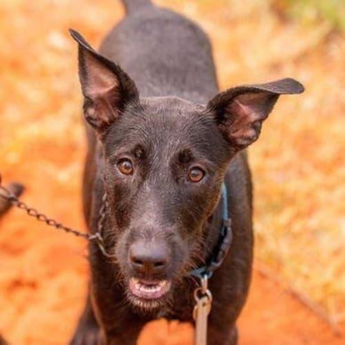 Brady - Mixed Breed Dog