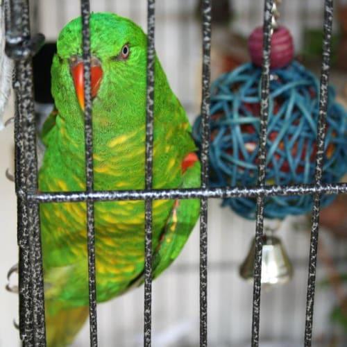 Monroe -  Bird