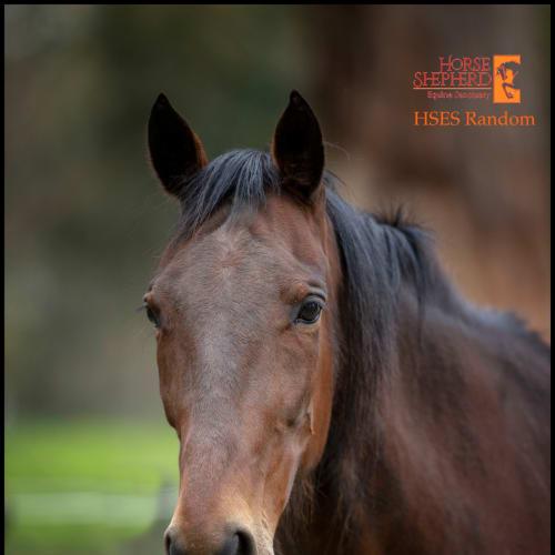 Randy -  Horse