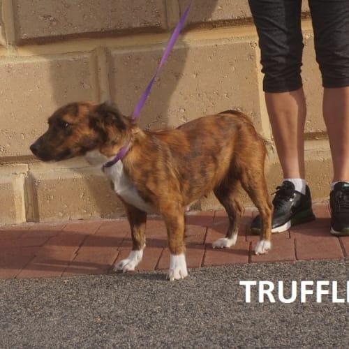 Truffle