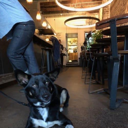 Onyx - Dingo