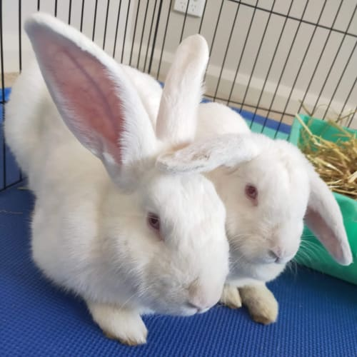 Hope and Toby -  Rabbit