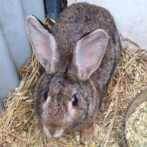 Peter - Bunny Rabbit