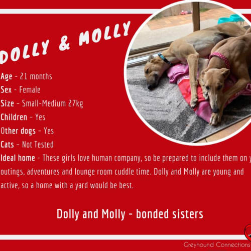 Dolly and Molly - Greyhound Dog