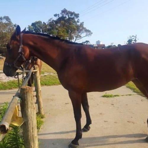 Demi - Standardbred Horse