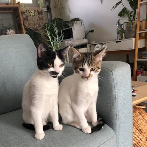 Mo & Lucy - inseparable sisters