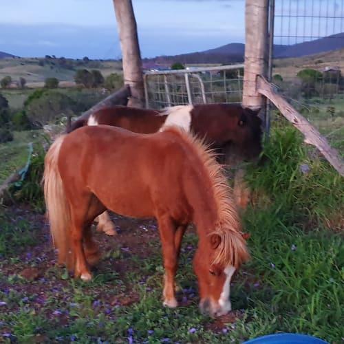 Chelsea -  Horse