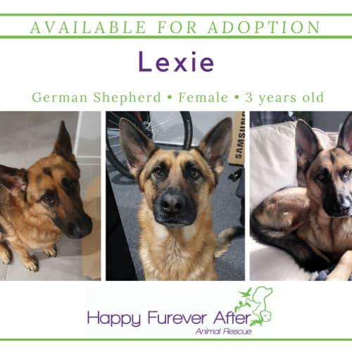 Lexie - German Shepherd Dog