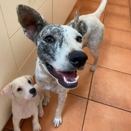 Tassie - Mixed Breed Dog