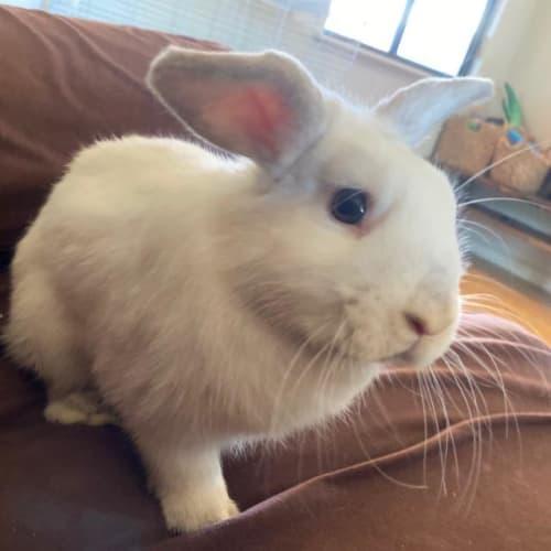 Coco - Bunny Rabbit