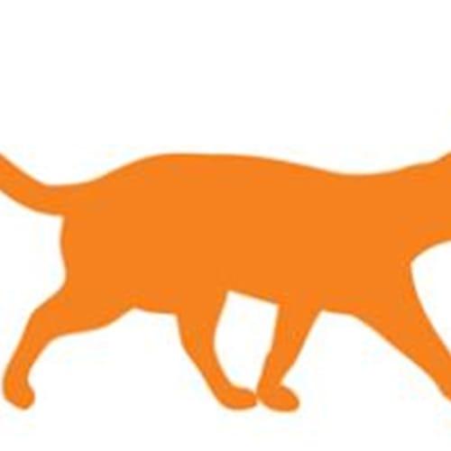 Patty Cake - Domestic Short Hair Cat
