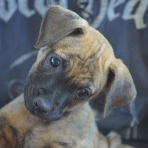 Bidgee - Mixed Breed Dog
