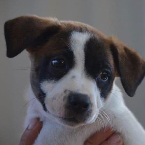 Mooka - Mixed Breed Dog