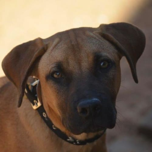 Denver - Mixed Breed Dog