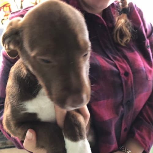 Ethel - Kelpie x Cross breed Dog