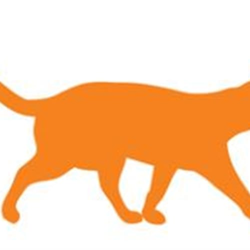 Hillery - Domestic Short Hair Cat