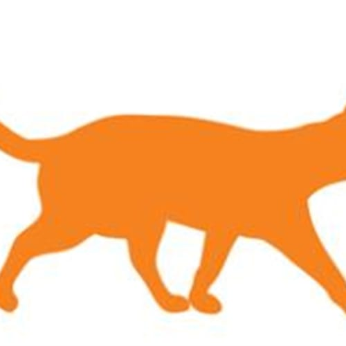Arabella - Domestic Medium Hair Cat
