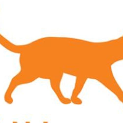 Liza - Domestic Short Hair Cat