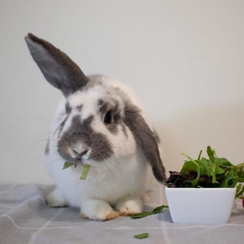 Rainbow - Bunny Rabbit