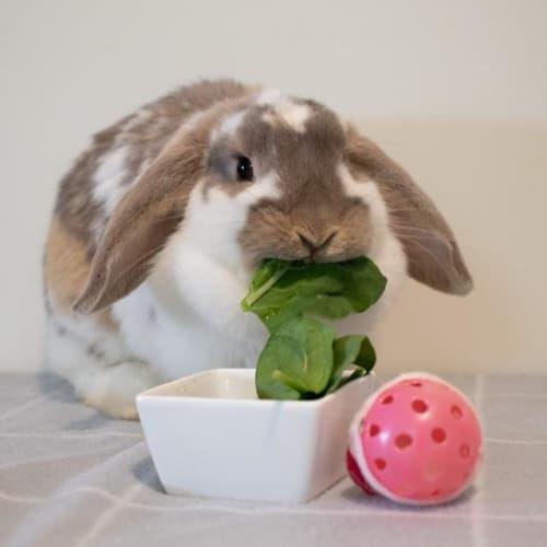 Sunshine - Bunny Rabbit