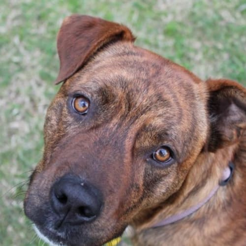 Diesel - Mixed Breed Dog