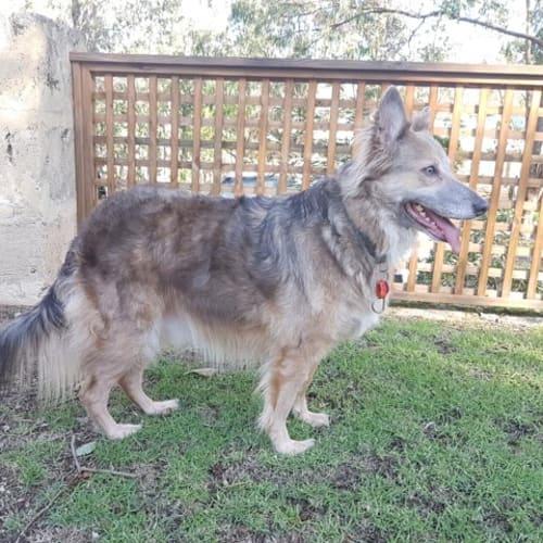 Keiko - Mixed Breed Dog