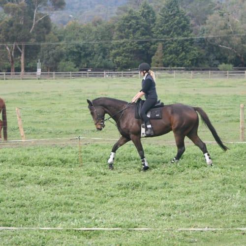 Wally -  Horse