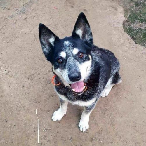 Tammi - Mixed Breed Dog