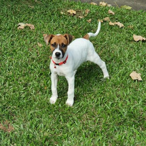 Macey - Mixed Breed Dog