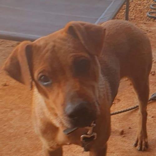 Dexter - Mixed Breed Dog
