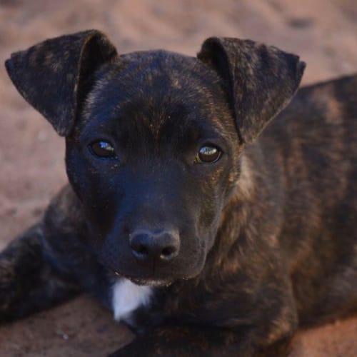 Bailey - Mixed Breed Dog