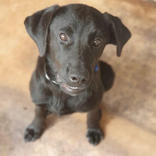 Tex - Mixed Breed Dog