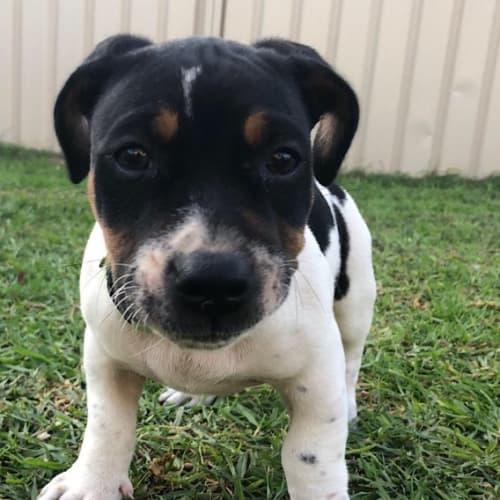 Harry - Mixed Breed Dog