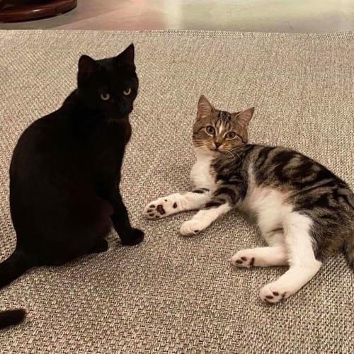 Kimi & Kaya - Domestic Short Hair Cat
