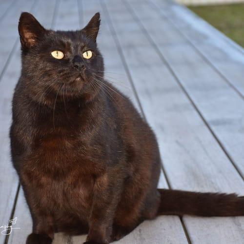 Blackie ** Total Love bug ** - Domestic Medium Hair Cat