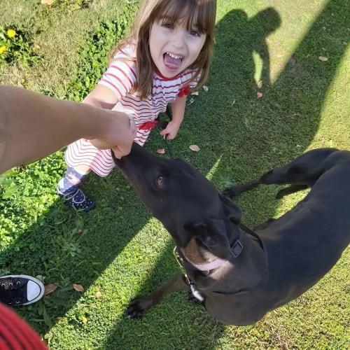 Callan - Greyhound Dog