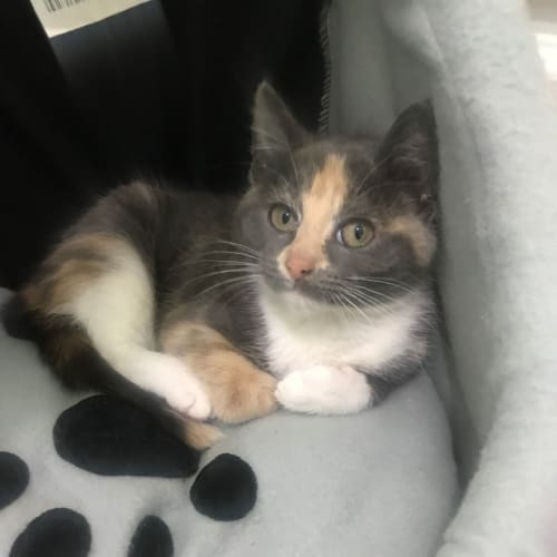 Jenine **2nd Chance Cat Rescue**