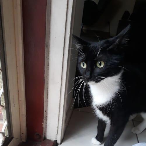Aldi - Domestic Short Hair Cat