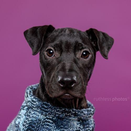 Teebo - Mixed Breed Dog