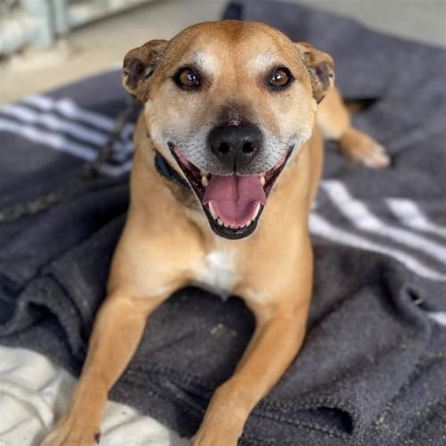 Aleisha - Medium Cross Breed Dog